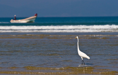 Egret and boat