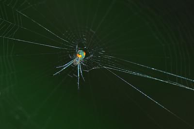 Peradeniya - Unidentified Spider
