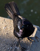 Black Bird<br /> <br /> May 1, 2012<br /> <br /> St. Simons Island, GA