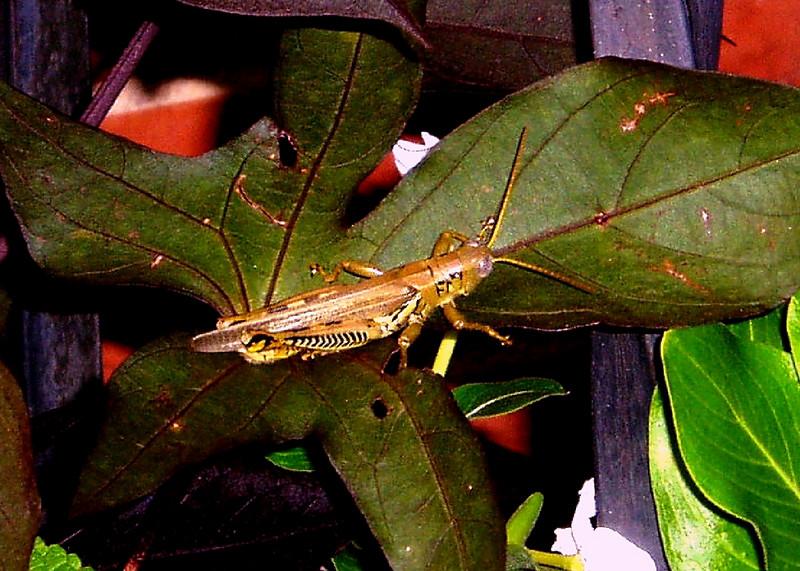 Grasshopper #1<br /> <br /> Summer 2005<br /> <br /> Baltimore, MD