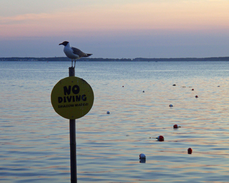 No Diving<br /> <br /> July 12, 2008<br /> <br /> Ocean City, MD