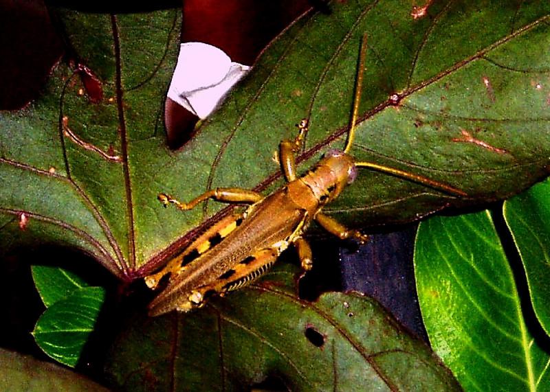 Grasshopper #3<br /> <br /> Summer 2005<br /> <br /> Baltimore, MD