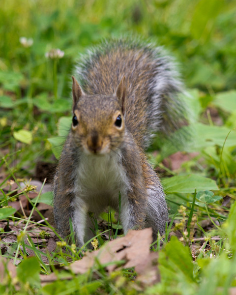 Squirrel!<br /> <br /> April 21, 2012<br /> <br /> Harrison Bay, TN