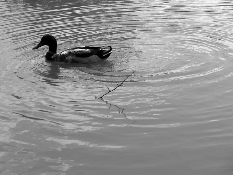 Quack<br /> <br /> May 15, 2006<br /> <br /> Baltimore, MD