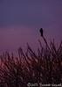 N20040507_0044<br /> <br /> Night Watch