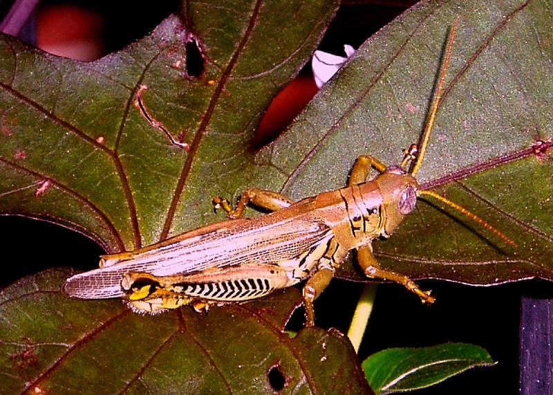 Grasshopper #2<br /> <br /> Summer 2005<br /> <br /> Baltimore, MD