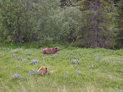 "Another view of the pair of brown bears, that I later labeled ""Mrs. Brown and her Young'un""."