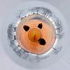 "<a href=""http://amywilburn.smugmug.com/gallery/2392782_4DYbZ#282261994_WXe8k"">http://amywilburn.smugmug.com/gallery/2392782_4DYbZ#282261994_WXe8k</a>"