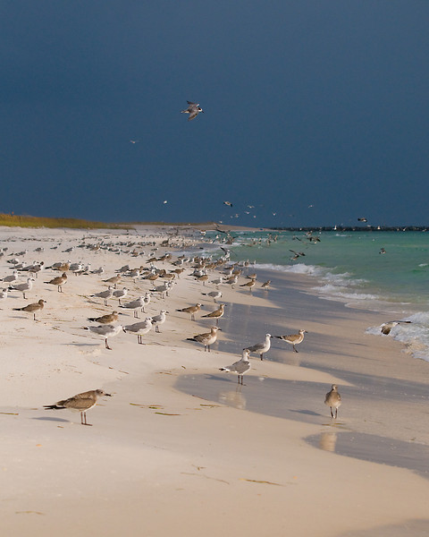 gulls lined up into the wind as a storm approaches