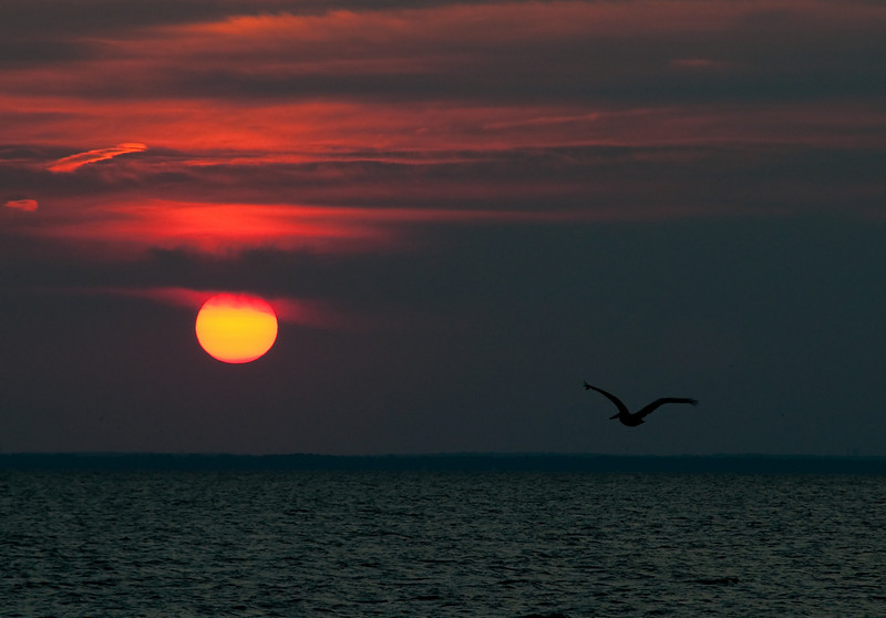 a pelican flies into the sunset on Mobile bay