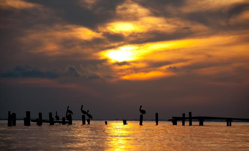 pelicans on pilings in Mobile bay