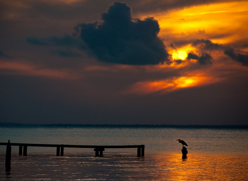 a blue heron silhouetted against the Mobile bay