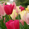 Arboretum Mar 06 005_edited-1