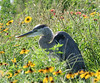 Heron in the wildflowers.
