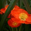 Arboretum Mar 06 060
