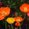 Arboretum Mar 06 059