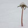 023 January Snow 4x6