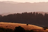 Watching sunset over the Pacific from Black Mountain with a doe in Monte Bello Open Space Preserve, CA.  2009.