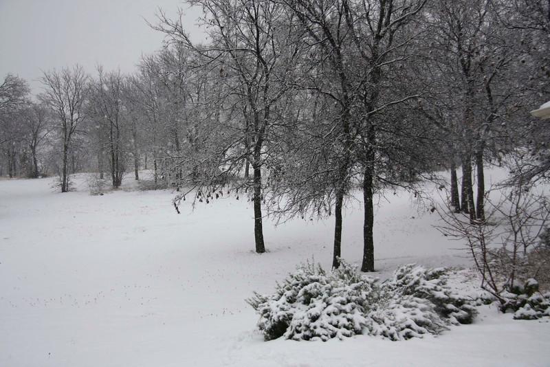 005 January Snow