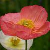 Arboretum Mar 06 008