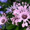 Arboretum Mar 06 019_edited-1