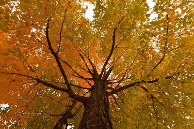 Looking up at Fall