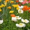 Arboretum Mar 06 007_edited-1