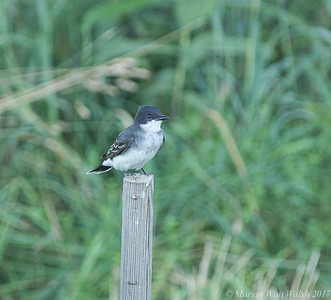 20170718 birds-16