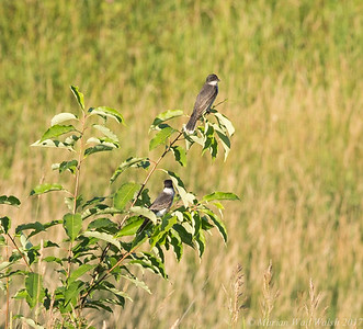 20170718 birds-20