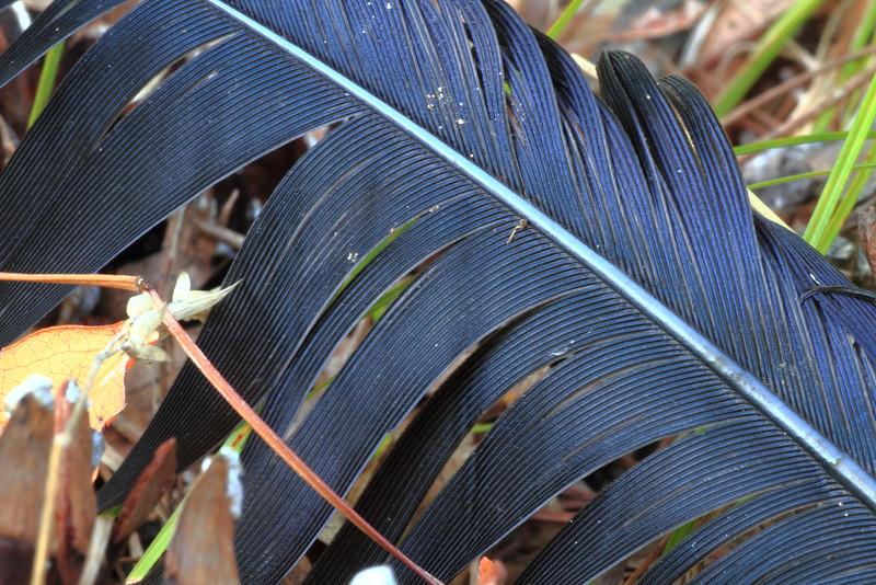 Feather- Mallard Lake