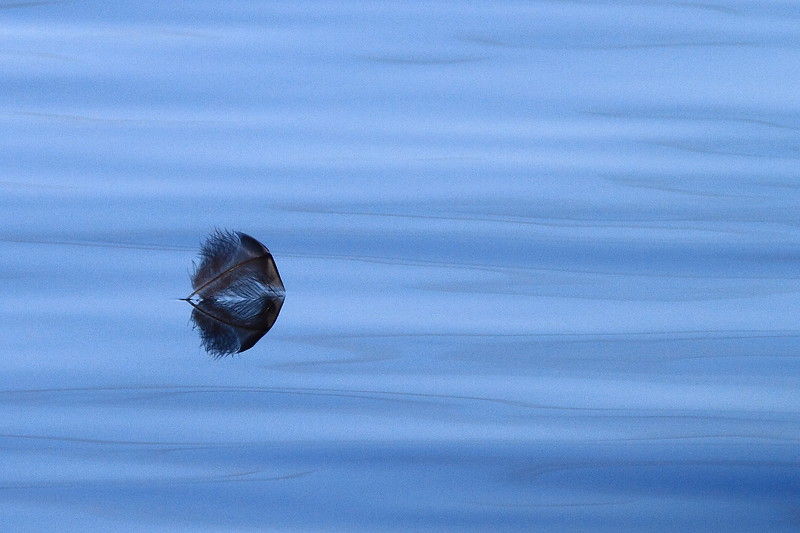 Feather on Water- Blue Lake