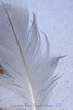 Feather on Snow- Park Point Beach, Duluth