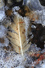 Frozen Feather- Mississippi River- Otsego Park
