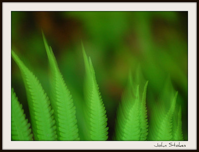 Feathery Ferns