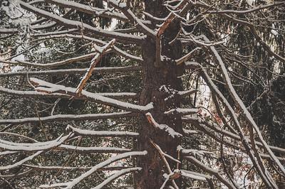 February snow, 2/4/14