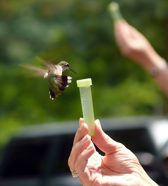 Feeding Humminbirds by Hand at Lake Hope Ohio