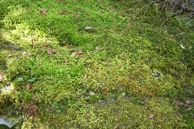 Just a photo of the green moss that was growing on a rock.