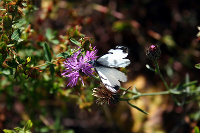 There was a pretty white butterfly that let me take its picture.