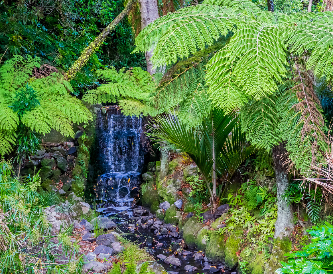 Botanical gardens, Wellington, NZ
