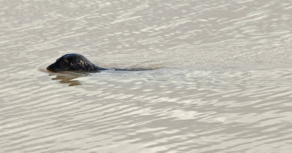 a seal !! highly unusual