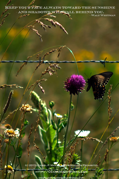 Early summer wildflowers, stray thistle, and a butterfly -- all of the attractive parts of a day, with none of the 90-degree heat and humidity.<br /> <br /> DSC_0115