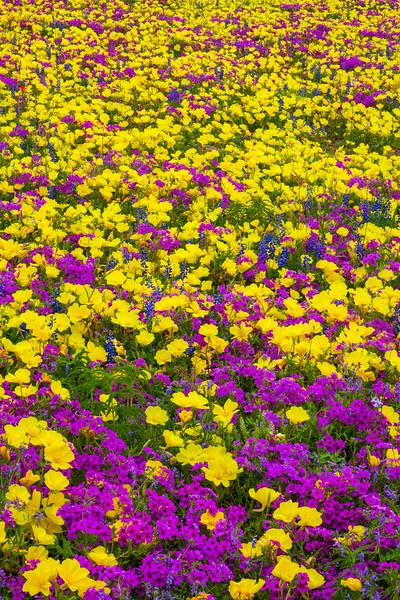 Fields of Wildflowers 1