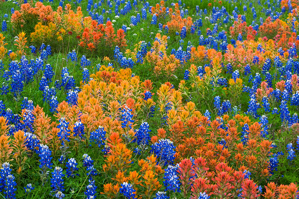 Fields of Wildflowers 2