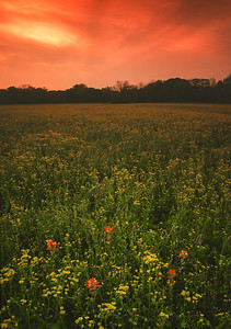 Sunset and Wildflowers
