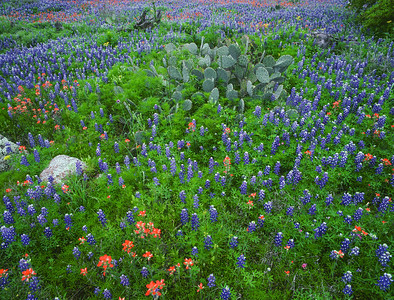Field of Cactus and Colors