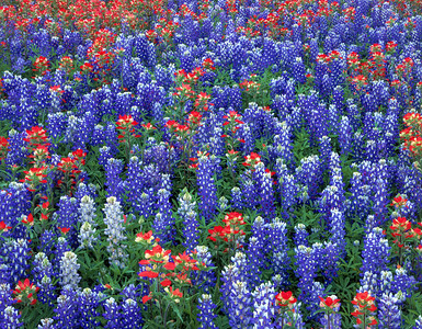 Premium Wildflowers