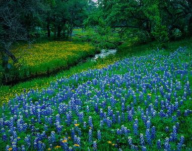 Bluebonnets and Creek