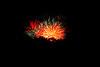 fireworks-2349