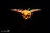 fireworks_d-5383