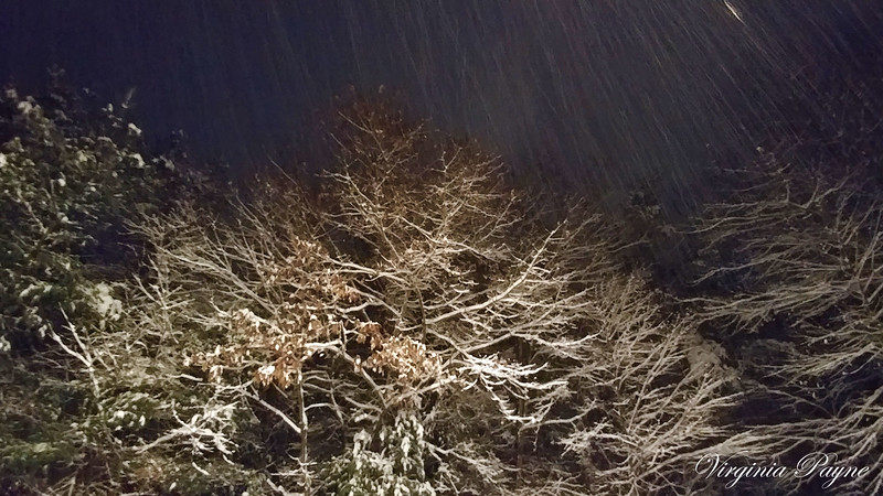Snow falling on the trees near our garages...